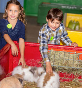 kids petting rabbits school trip to green meadows farm kissimmee fl